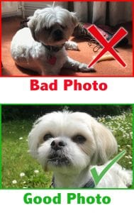 Picture Parcel Pet Portraits- Good pet photo guidelines.