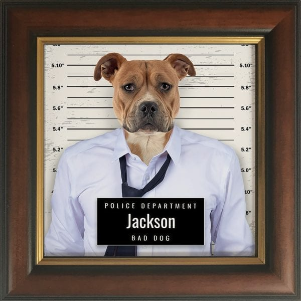 Picture Parcel crook pet porrait - police line up. Great and fun pet portrait gift. This is pet portrait in a Brown and Gold frame.