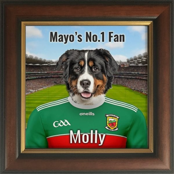 Mayo GAA fans gift. A personalised pet portrait ceramic GAA gift in a gold and brown real wood frame. Picture Parcel pet portraits are handmade in Ireland and ship worldwide. A great gift for any GAA supporter at home or abroad.