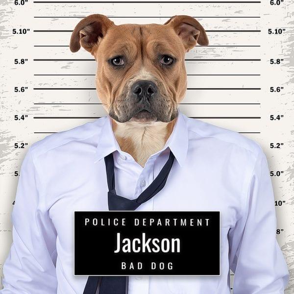 Picture Parcel Pet Portraits - Crook/gangster pet portrait. Ceramic pet portrait art comes framed in a real-wood frame