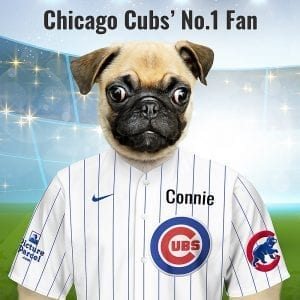 Chicago Cubs In 1902, a local newspaper dubbed the local baseball team the Cubs as they had a very youthful team and the name stuck. Picture Parcel Pet portraits digitally paint your pet in the Chicago Cubs team colours. Oil painting style on a piece of ceramic art. Framed in a real-wood frame. Fantastic gift for all Chicago Cubs fans and pet owners. You can design your pet portrait online and we look after the rest.