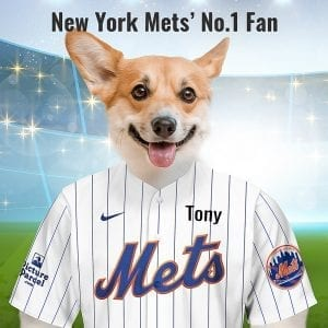 New York Mets In 1961, New York City Baseball club officials chose Mets as the new name from more than 9,613 suggestions, and 644 different names in a name-the-team contest. Picture Parcel are proud to make these pet portraits for New York Mets fans. Your pet in the New York Mets team colours. Oil painting style on a piece of ceramic art. Framed in a real-wood frame. Fantastic gift for New York Mets fans.