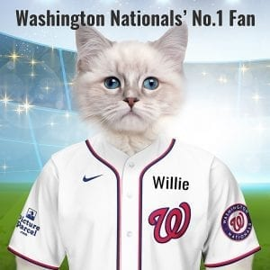 Washington Nationals Originally the Senators and National. It stuck to just the National nickname from 1971 onwards. Looking for an unusual gift for a Washington Nationals fan? Picture Parcel Pet portraits digitally paint your pet in the Tampa Bay Rays team colours. Oil painting style on a piece of ceramic art. Framed in a real-wood frame. Fantastic gift for all Washington Nationals fans and pet owners. You can design your pet portrait online and we look after the rest. This is a custom made baseball Washington Nationals fan gift suitable for any occasions.