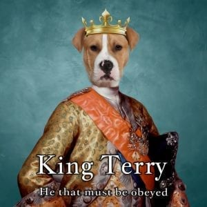 King Terry- Dog King portrait - Ireland